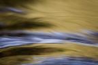 The Alluring Shades of Lagunitas Creek